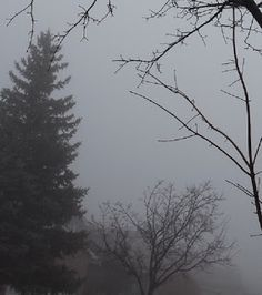 Fun For All: Trees In Fog Photo Galleries, Trees, Snow, Gallery, Fun, Outdoor, Outdoors, Roof Rack, Outdoor Games