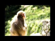 Takasakiyama 타카사키야마 동물원 高崎山自然動物園