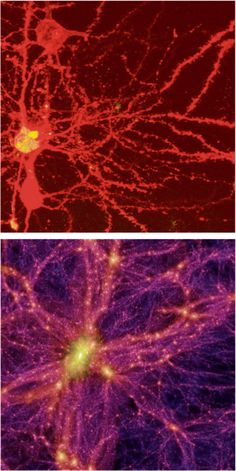 diagrams show that our neurons very closely resemble the structure of the universe.