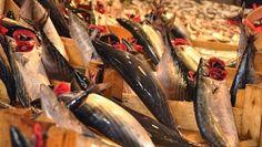 İstanbul'da palamut balığı fiyatları. Balık sezonu açıldı, malumunuz palamut mevsimi başladı. İstanbul'da palamutun tanesini ortalama 10-15 TL arasından alıyorduk...