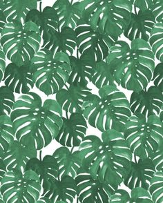 Monstera house plant leaf green painting pattern trendy hipster indoor house plant tropical garden by CharlotteWinter