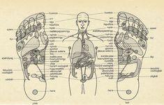 A talp és a szervek kapcsolata