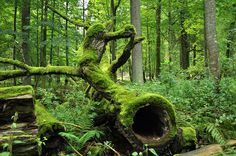 Bialowieza Forest and National_Park_in_Poland Beautiful Forest, Trees Beautiful, Beautiful Pictures, All Nature, Central Europe, Nature Reserve, Mellow Yellow, World Heritage Sites, Travel Around The World