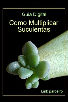 Cactus, Succulents, Button Hole, Nagoya, Plants, Alice, Apple Vinegar Uses, Plant Propagation, Yard Sign Stakes