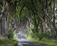 Észak-Írország, Dark Hedges