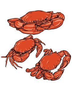 80% Off Sale Vector crab drawing. Hand drawn monochrome seafood illustration. Great for menu, poster or label. (EPS, JPG)