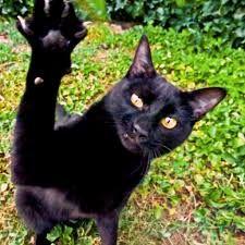 Risultati immagini per gatti neri
