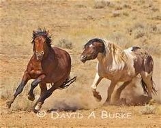 Mustangs... I should get a gelding and name him Ford... The I'd have my very own Ford Mustang XD