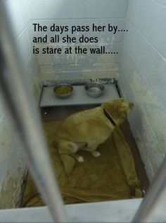 Family dog stares at the walls behind bars after being surrendered - this kills me!