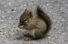 Image result for baby squirrel