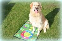 Dogs, Animals, Animales, Animaux, Doggies, Animal, Pet Dogs, Animais, Dog