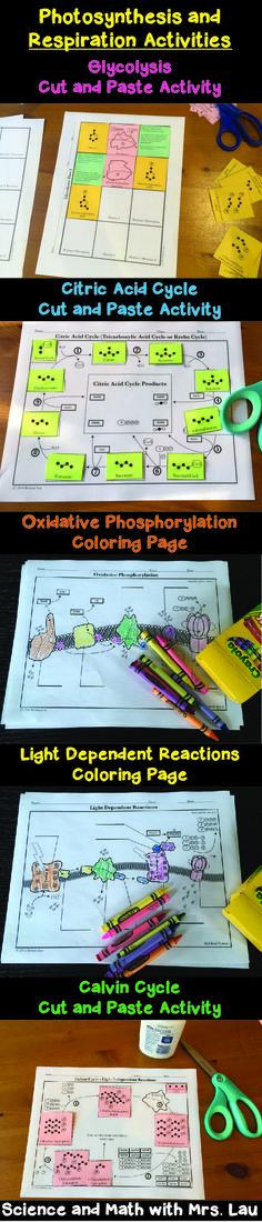 Cellular Respiration Diagram Worksheet Photosynthesis