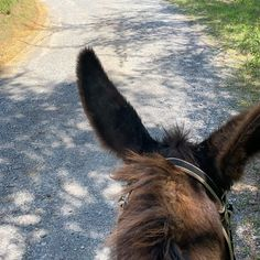 "Donkey Listener's Instagram video: ""A clip from my short 2 mile trail ride around the farm with Jasper😍 I love the sound of his #donkeyhooves Putting in some work today with…"" Horseback Riding Trails, Trail Riding, Work Today, Donkey, Jasper, Horses, My Love, Animals, Instagram"