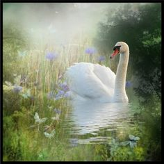 """""""the swan pond"""" by simplypj ❤ liked on Polyvore"""