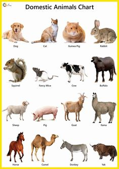 Explore our list of domestic animals names in English. High-quality pictures, photos, videos, printable charts, stickers and colouring sheets for kids. Animals Name With Picture, Animals Name List, Wild Animals List, Animals Name In English, English Activities For Kids, Learning English For Kids, English Worksheets For Kids, English Lessons For Kids, Preschool Learning Activities