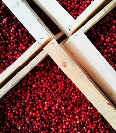 Lingonberries/ they absolutely have these. I LOVE ligonberries! They're like little sweet cranberries! Swedish Foods, Swedish Recipes, Xmas Recipes, Fresh Market, Xmas Food, Fruit And Veg, Great Friends, Cranberries, Ancestry