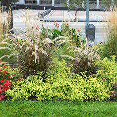Begonia and lantana; structural plants such as ornamental grasses provide a play of color and maintain visual interest during autumn and fall; A defined edge that uses materials (even simple rubber tubing) to prevent grass/weeds from entering the garden bed save time
