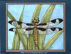 """Dragonfly on Iris Leaves"" - Card made with Lila Grey Digi Stamp."
