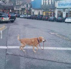 Pies na spacerze #pies #na spacerze