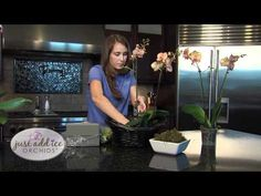How to Make a Planter With Just Add Ice Orchids