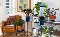 Veja como cuidar e organizar os vasos