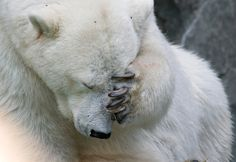 The 10 dumbest things ever said about global warming. -  Climate change denial makes this Polar Bear sad.