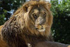 Parco Zoo Falconara ingresso al Parco Zoo Falconara, un'avventura incredibile che ti porterà faccia a faccia con tantissimi animali...a soli 10 € a persona