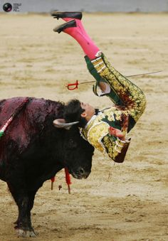 getting what The Scum Of The Earth Deserves! Brave Animals, Scum Of The Earth, The Barnyard, Bull Horns, Bull Riders, Pamplona, Great Photos, Pet Birds, Animal Pictures