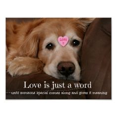 Golden Retriever Love Is Just a Word Poster by #AugieDoggyStore