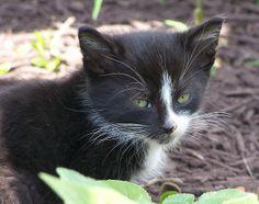 Stray kitten by lynnirene, via Flickr