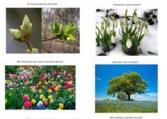 Prezentácia o jari