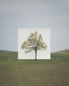 Tree species during different seasons and times of day framed and photographed by Korean Artist Myoung Ho Lee. Born in Myoung Ho Lee is a South Land Art, Canvas Background, Outdoor Trees, Photo Vintage, Photo Portrait, Vivian Maier, White Backdrop, Korean Artist, Big Canvas