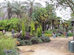 Read The Gardens at Lake Merritt by Nancy Swearengen A group of volunteers tidies the Mediterranean Garden and Palmetum.  Photo: Bruce Cobbledick