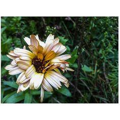 Wet flower Flowers, Plants, Etsy, Plant, Royal Icing Flowers, Flower, Florals, Floral, Planets