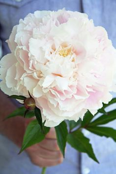 A Country Farmhouse: Pink Peonies