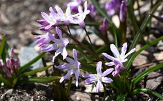 The best plants for winter garden colour - David Domoney - Fill your winter garden with scent, colour and silhouette! Don't let the garden go bare and dorma - Flowers Uk, Winter Flowers, Bulb Flowers, Types Of Flowers, Flowers Garden, Garden Plants, Unusual Flowers, Spring Flowering Bulbs, Blooming Plants