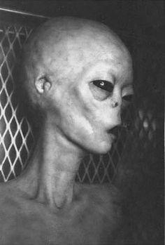 alien..  like the ear