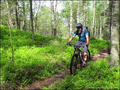 Life is good on the Blueberry Trail. Rider: Greg Heil. Photo: Leo Ranta.