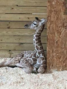April's new Baby boy