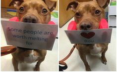 A Therapy Pit Bull Is Helping A Girl Overcome Her Fear Of Dogs In The Most Adorable Way