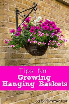 Check out these tips for growing a hanging basket to help you have a beautiful basket this summer! Check out these tips for growing hanging baskets to help you create a beautiful bouquet of flowers. Plants For Hanging Baskets, Hanging Flower Baskets, Diy Hanging, Hanging Planters, Petunia Hanging Baskets, Hanging Plants Outdoor, Photo Hanging, Fall Planters, Outdoor Decor