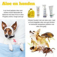 i ALOE VERA is de grootste online retailer van Forever producten in de Benelux. Like onze Facebookpagina: https://www.facebook.com/flp.i.aloe.vera Bestellen in de webshop? http://i-aloe-vera.flp.com/shop.jsf