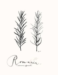 Romarin 85X11  Collection Art Culinaire by evajuliet on Etsy, $22.00