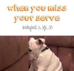 volleyball humor. cute dog he looks so ashamed