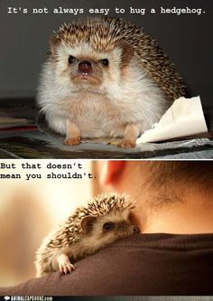 Hedgehogs need hugs too