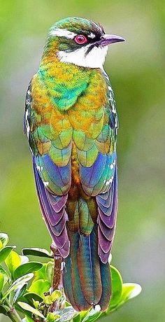 Vackra färger..