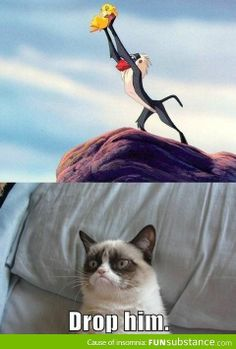 Grumpy cat is not a Simba fan. Possibly the best grumpy cat ever. Cute Animal Memes, Funny Animal Quotes, Animal Jokes, Funny Animal Pictures, Cute Funny Animals, Cute Cats, Funny Quotes, Food Quotes, Grumpy Cat Quotes