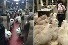 19 Pictures Of What Heaven Looks Like, Probably