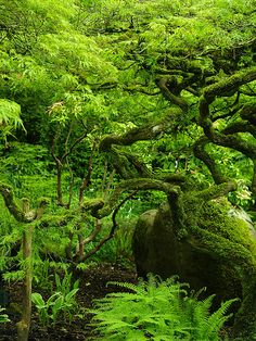 Butchart Japanese Garden started by Jennie Butchart.  Located on Vancouver Island near Victoria in British Columbia, Canada.