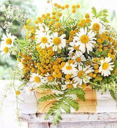 God strålende mandag alle sammen ! #wildflowers #summertime #sommerblomster #gult #vibekedesign